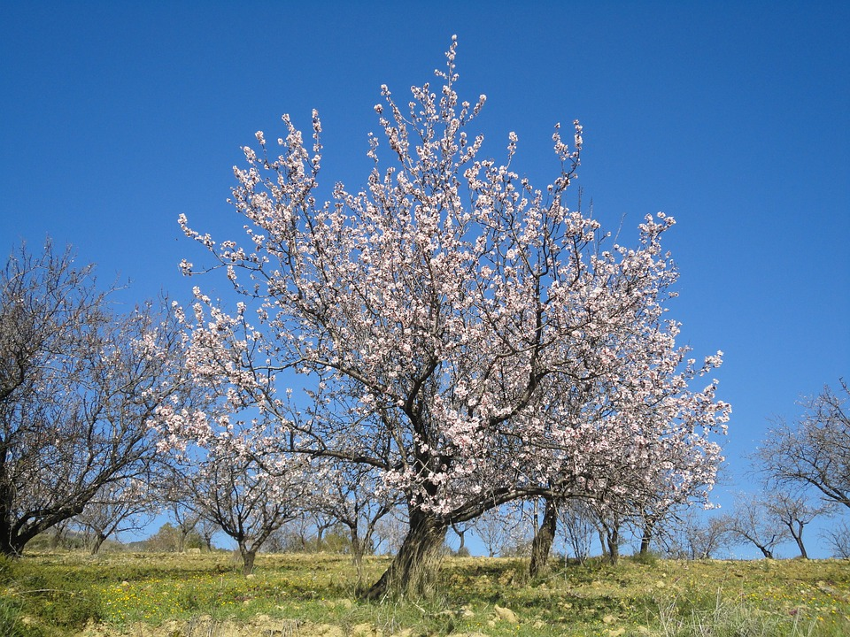 Malaga in February  - The month of the Almond Blossom and Springtime