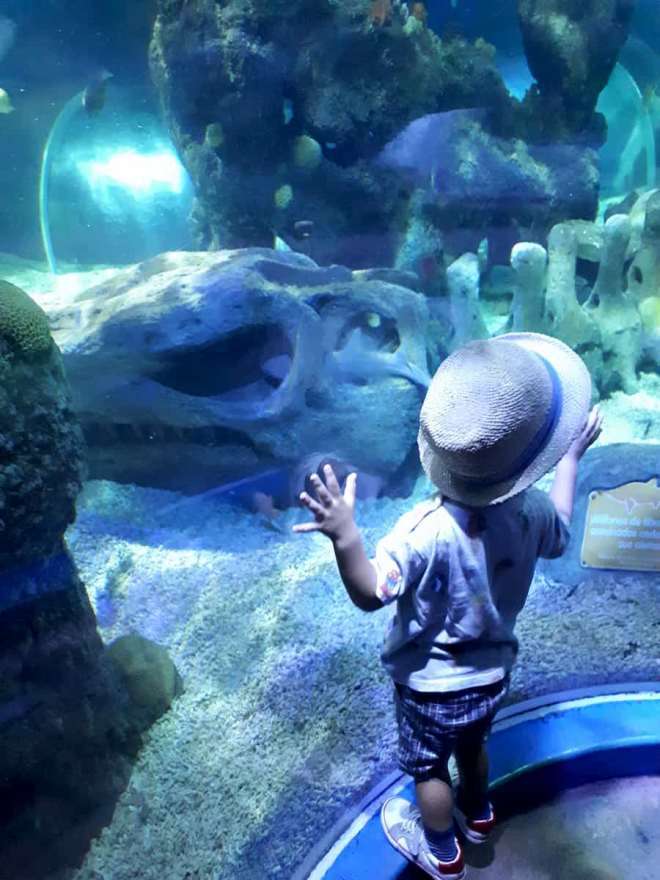 My son in the aquarium