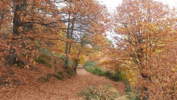 Herbst in Málaga
