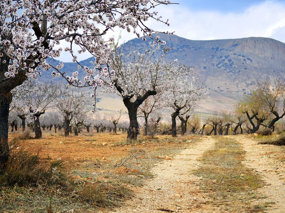 Februar– Der Monat der Mandelblüte und Frühlingszeit in Málaga