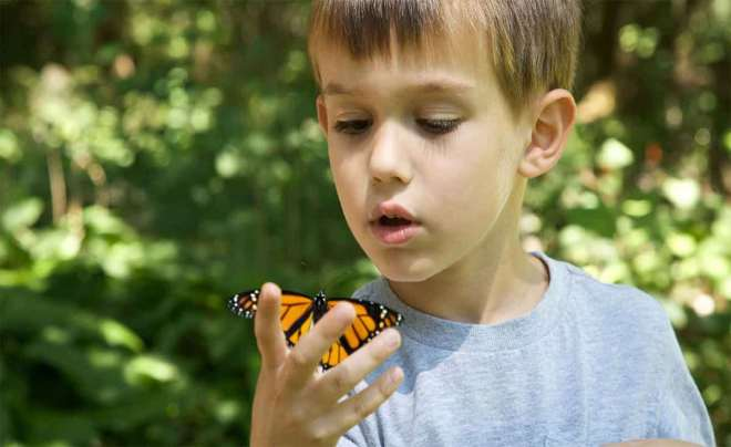 Child watching butterfly on his hand