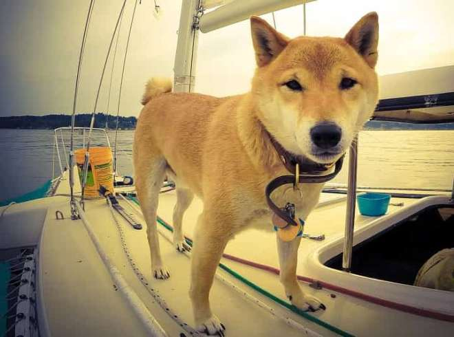 cruiser dog