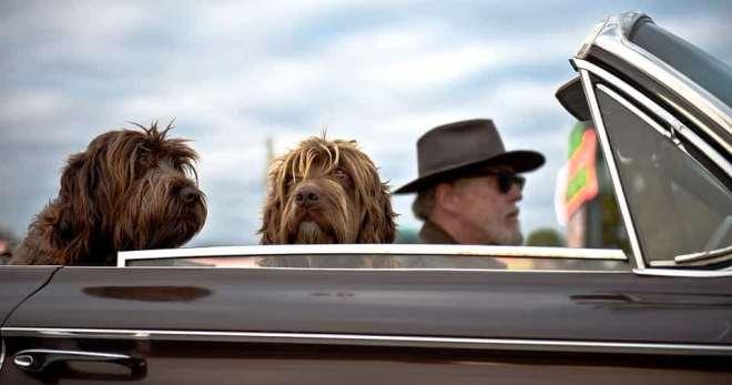 Conducir con perros