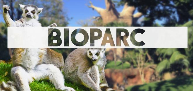 Bild von Lemuren im Bioparc Fuengirola