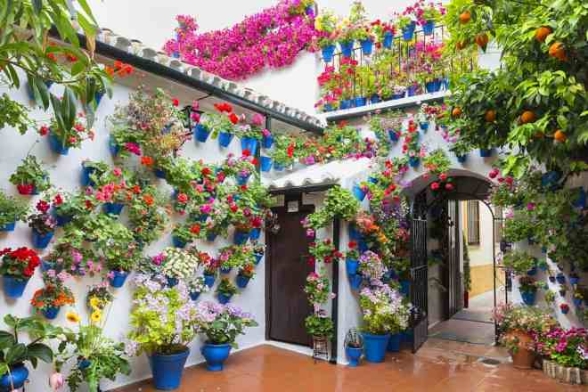 Festival of the Patios in Cordoba