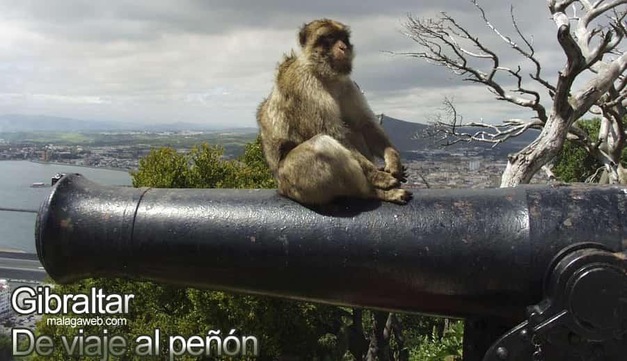 Gibraltar y mono sobre cañón