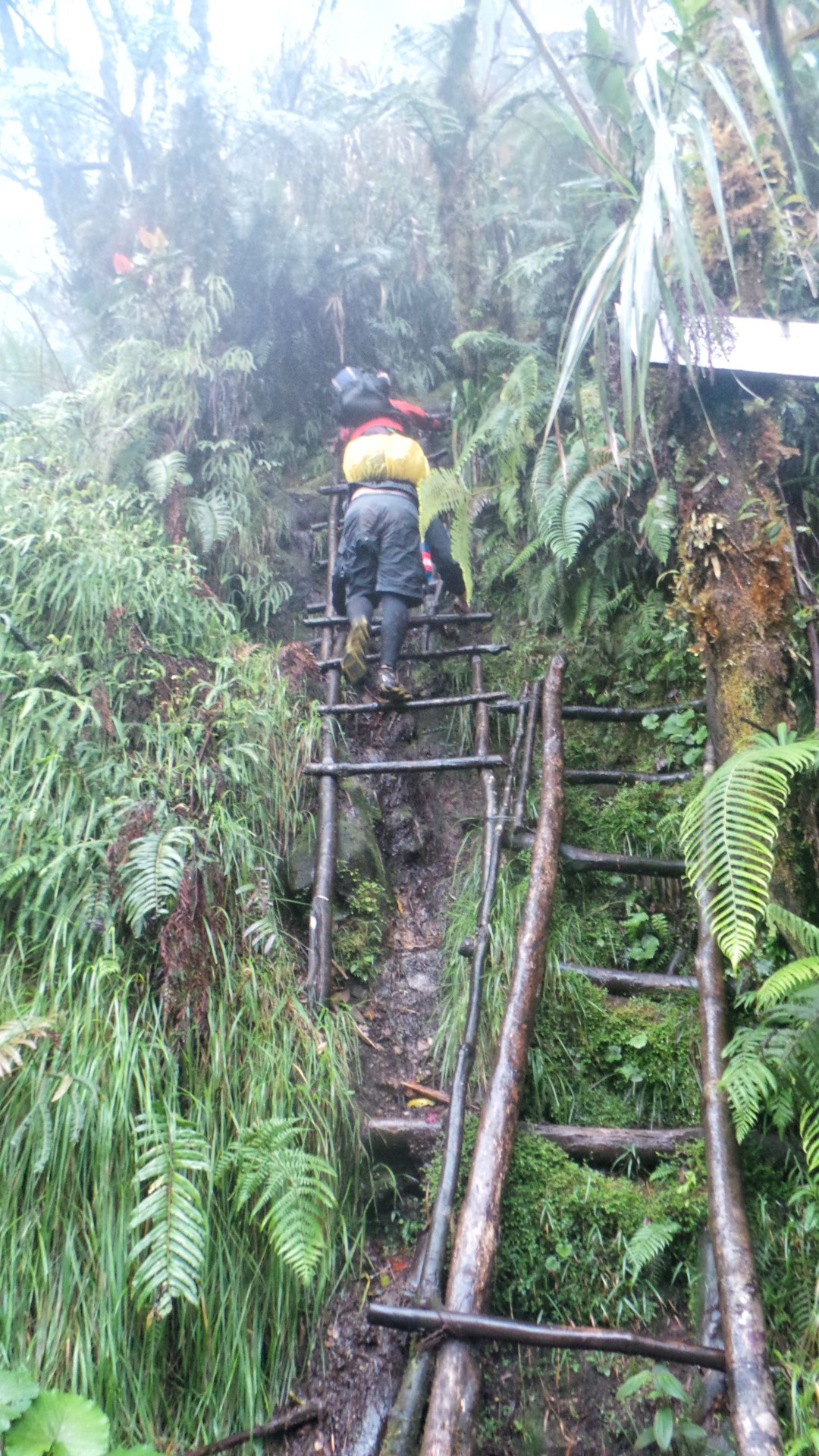 ladder section in mt apo