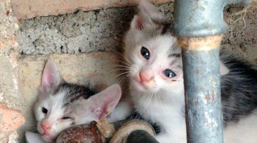 """L'Associazione """"I Randagi nel Cuore"""" a difesa degli animali in difficoltà"""