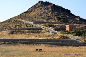 Wild horses, Kalafatis, Mykonos