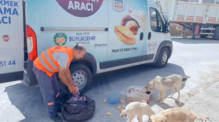 Büyükşehir Belediyesi Sokak Hayvanlarını Unutmuyor