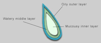 Composition of tear layers