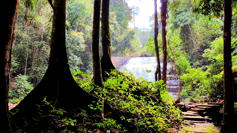 A beautiful scenery at the upper part of the Bukit Hijau stream.