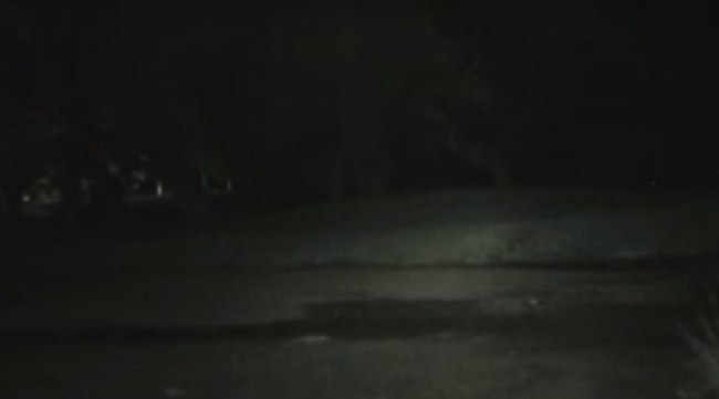 A mysterious animal dark figure was recorded on video camera.