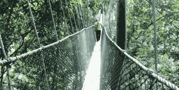 Natural paradise of Taman Negara, Malaysia
