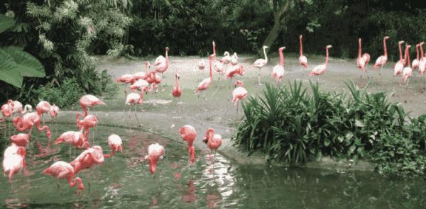 KL Bird Park Lake Garden