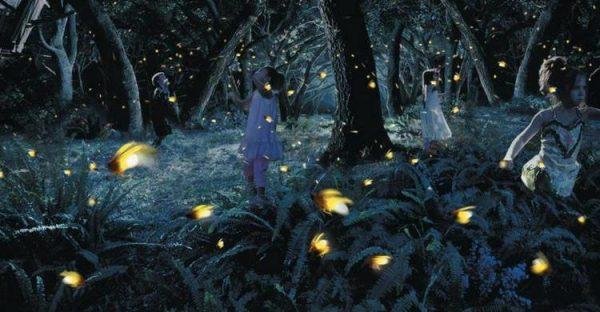 Kampung Kuantan Fireflies Park