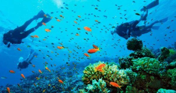 Scuba diving in Sipadan Island
