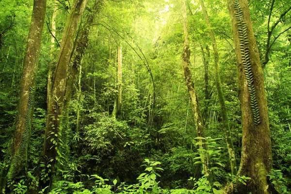 Rainforest Landscape, Malaysia