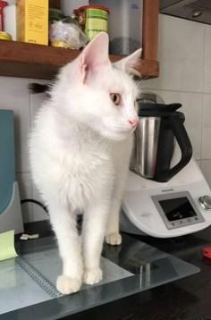 Bertie (homed in March 2017)