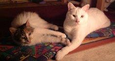 Scruffy (homed in 2002) & Einstein, 2002