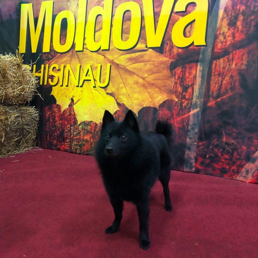 Milou Moldovan näyttelyssä