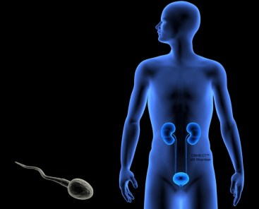 Low Sperm Count - Oligozoospermia Treatment