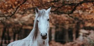 Hest i efterårsfarver