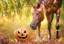 hest og græskar i skov