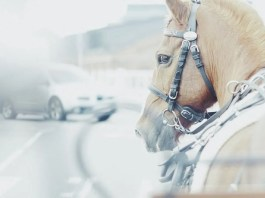 Hestevogn og bil på vej