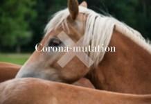 corona-mutation hos heste sker ikke