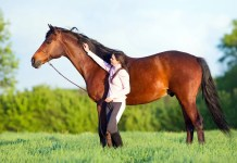 hest gåtur