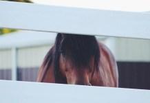 brun hest bag hegn