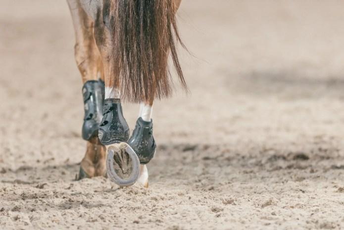 Hestehove med springgamacher på ridebane.