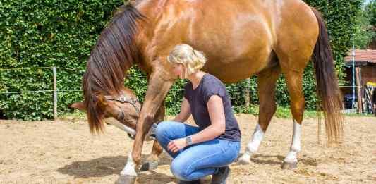 hestens intentioner