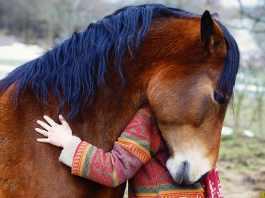 Tilknytning mellem heste og mennesker