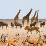"""Investigación revela que 90% de los animales surgieron """"al mismo tiempo"""""""