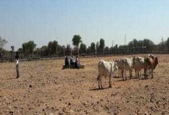 Résilience des éleveurs de pasteurs face aux changements climatiques : Les régions de Mopti, Tombouctou et Kidal bientôt couvertes par le service Garbal