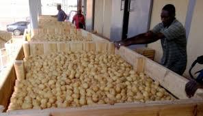 Commerce de la pomme de terre : Des prix plafonds de 175 et 250 FCFA/kg pour les mois d'avril et mai prochains
