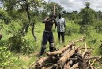 Exportation des produits forestiers non ligneux : L'étude d'impact des redevances forestières perçues validée