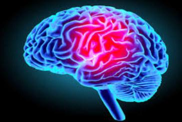 Santé : Comment fonctionne le cerveau ?