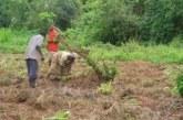 Exploitation du bois au Mali : Des meures en faveur de la transformation locale