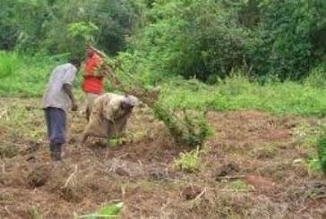 Gestion des fonciers agricoles au Mali : Une commission foncière villageoise pour atténuer la souffrance des ruraux