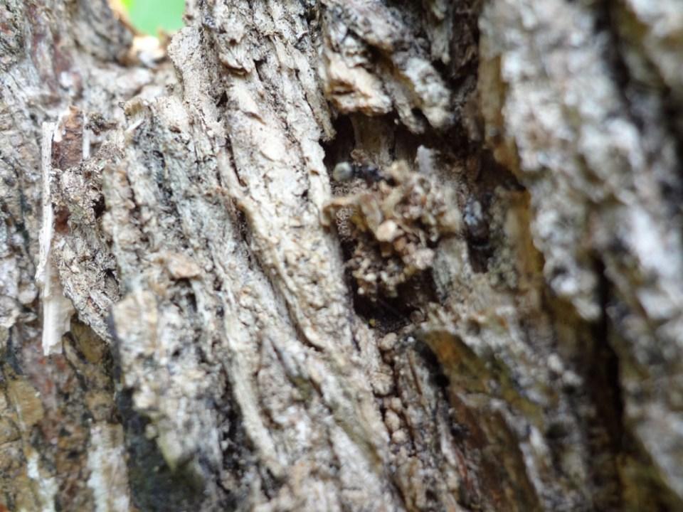 camouflaged spider malinga.me