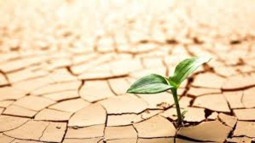 Menyuburkan Tanah yang Kering