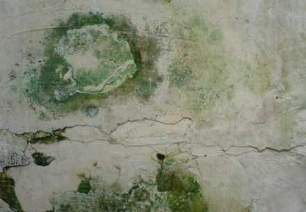 Penyebab Dinding Berlumut