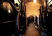 Bodega Es Fangar - Ökologische Weine aus Leidenschaft!