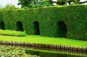 Tipps zur Heckenpflanzung