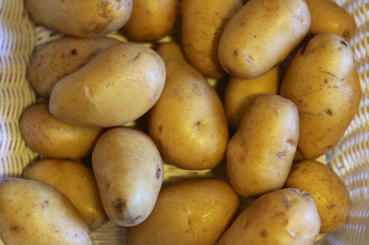 Kartoffel aus Mallorca
