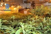 Marihuana-Plantage in Sineu