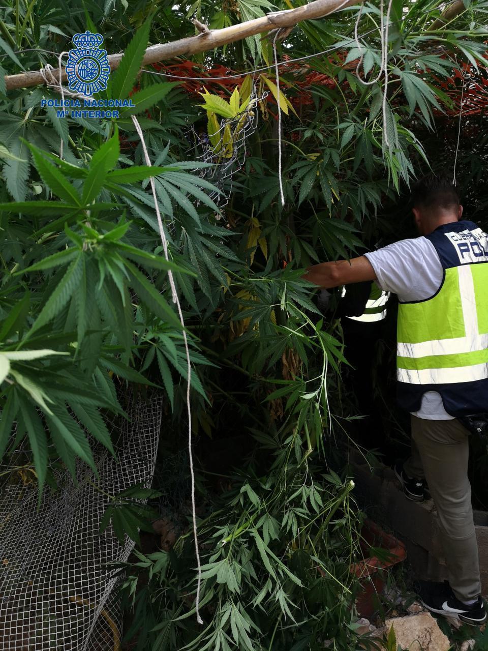 Illegale Marihuana-Plantage in Porto Cristo
